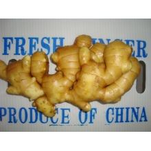 Organic fresh ginger for sale