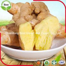 Gengibre fresco integral chinês com tamanho diferente