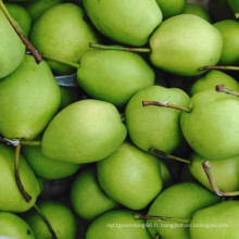 Poires fraîches, poire Shandong