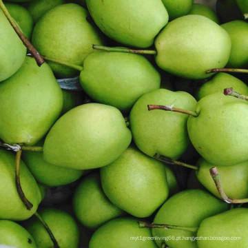 Peras frescas, pêra de Shandong