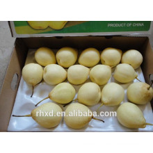 new crop pears price/Wholesale fresh fruit fresh Ya pears/Organic Fresh ya Pear