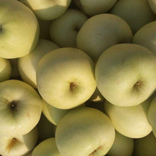 Ningxia Fresh Yellow Delicious Bulk Apples Low Price