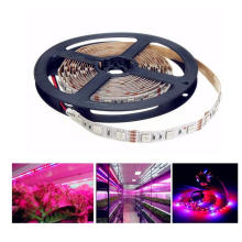 DC12V Red Blue 4:1 LED Plant Grow Lights 5050 LED Strip for Greenhouse Hydroponic Plant Growing