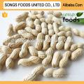Meilleures ventes produits chansons aliments crus arachide en coque