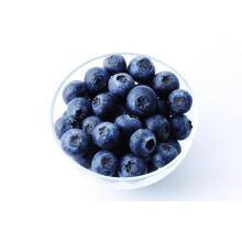 IQF congelación orgánica Blueberry Zl-160001
