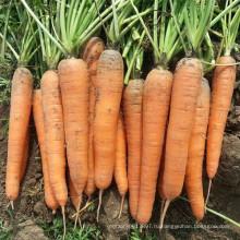 HCA08 Bianer 20 до 25см в длину,ОП семян морковь семена овощных культур