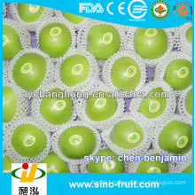 wholesale green apples in China