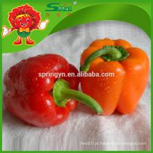 Fresh capsicum best sweet peppers fornecedor