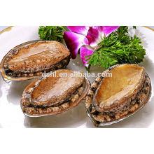 Gefrorenes gekochtes Abalone mit Schale