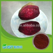 100% Natural and high quality sugar beet powder with competitive price