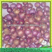 2-3cm China cebolla roja, cebolla pequeña