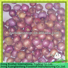 2-3cm China red onion,small onion