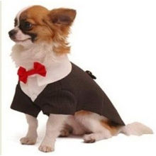 "Handsome Striped Doggie Tuxedo Costume With Collar Detail And Red Bow Tie 14"" 22"" 16"""