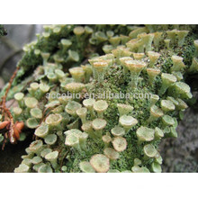 High quality Xanthoparmelia Scabrosa Extract Wholesale, Natural Lichen Extract for Sexual Enhancer