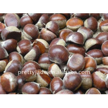 Supply fresh chestnut