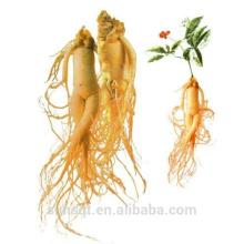 Hohe Qualität Verlängern Leben Ginseng Root Exact