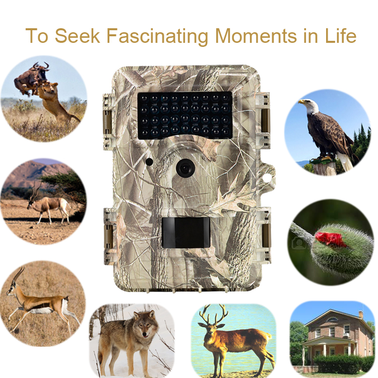 Hunting Trail Camera