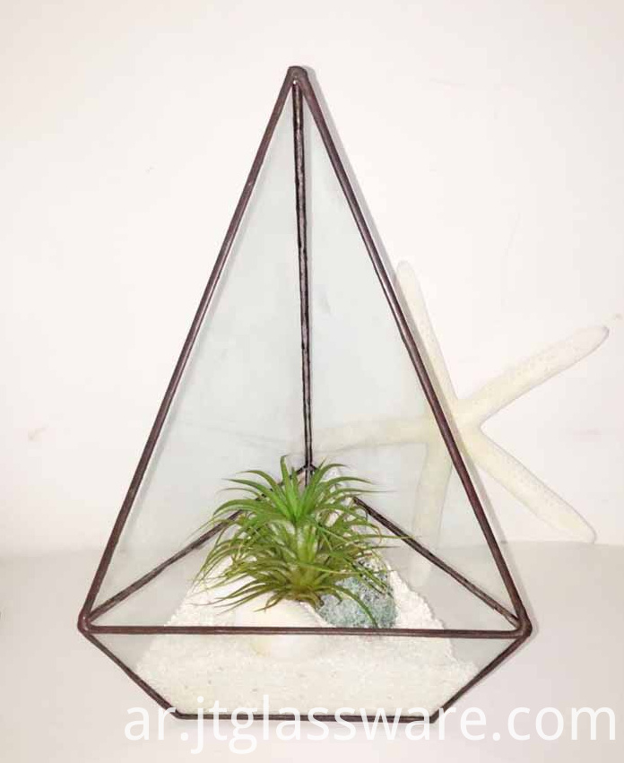 Square Glass Plant Terrarium2