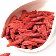 semillas de menta china Ningxia Goji Berry rojo