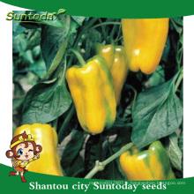 Suntoday légumes F1 organique jusqu'à jaune cloche doux mariné jalapeno poivre habanero piment légumes syngenta graines (21019)
