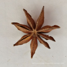 Chinese Guangxi Spring And Autumn Star Aniseed Anise Ba Jiao