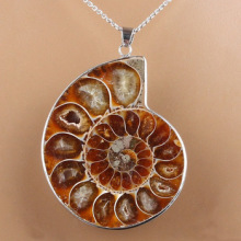 Natural Shell Nautilus wrapped in silver necklace