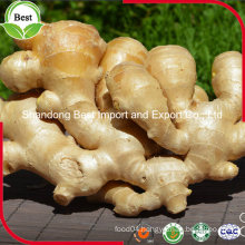 300g up Whole Fresh Old Ginger