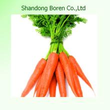 2015 zanahorias frescas de bebé de Shandong China