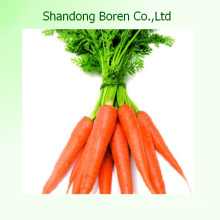 2015 Fresh Baby Carrots From Shandong China