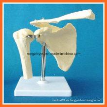 Simulación anatómica humana Modelo de esqueleto articular de hombro para la enseñanza médica