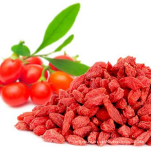 china ningxia Sun Dried Goji Berry
