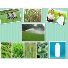 Sugarcane Wideleave Herbicide Weedcide Control Post Emergenceof Grass Weeds Ametryn