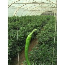 UV Stable Tomato Twine PP Twine/Rope