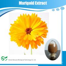 Extrait De Fleur De Marigold Extrait De Marigold À La Luthine En Poudre