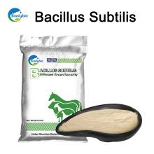 Probióticos aditivos para ração animal Bacillus subtilis com 20/50/100 bilhões
