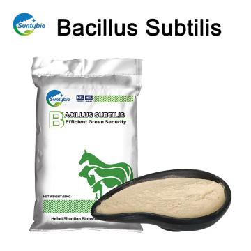 Heißer Verkauf Bacillus Subtilis für Tierfütterung