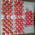 Price for fresh apple