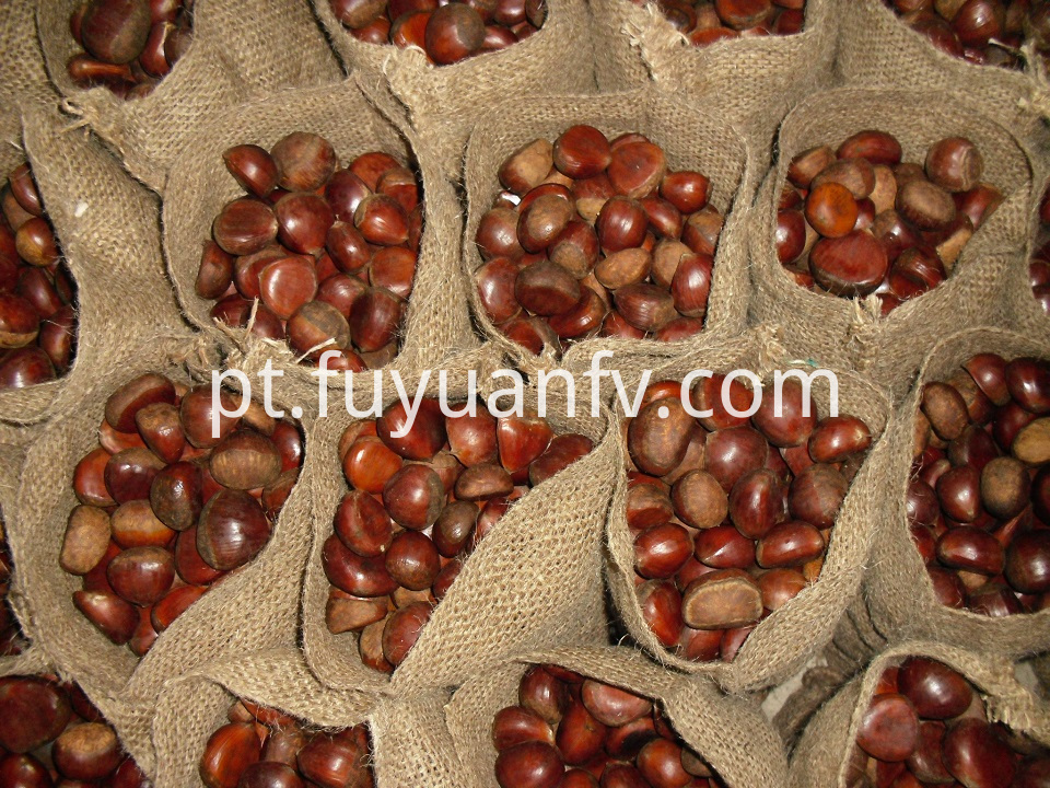 brown color chestnut for export