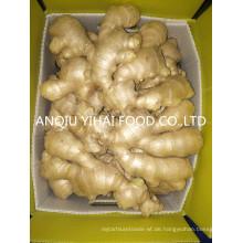 Anqiu Air-Dry-Ingwer und frischen Ingwer zum Verkauf