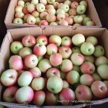 Pomme de gala non sacrée nouvelle saison