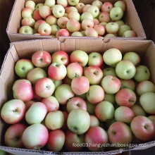 New Season Unbagged Gala Apple