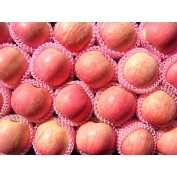 Las manzanas frescas Fuji son calientes