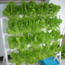 Jardinage simple d'intérieur de culture hydroponique