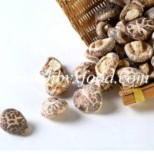 Champignons de fleurs de thé séchés sous vide et à différentes tailles