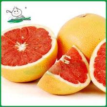 Neue Ernte frische rote Honig Pomelo Früchte