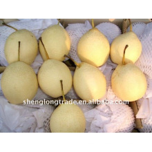 2011 china fresh ya pears