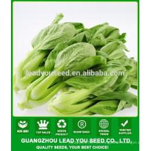 NPK11 Luomu China pak choi sementes manufactory, sementes para campo aberto
