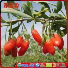 Высокий уровень экспорта сушеных годжи ягоды годжи ягоды годжи с низкой ценой