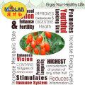 Medlar Ningxia Himalayan Goji Berry
