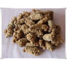 Factory Natural Notoginsenoside/ Pseudo Ginseng/ Sanchi Extract Powder